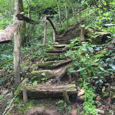Trail in North Carolina
