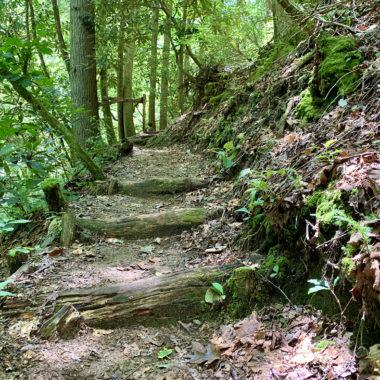 Hiking trail in Brevard, NC