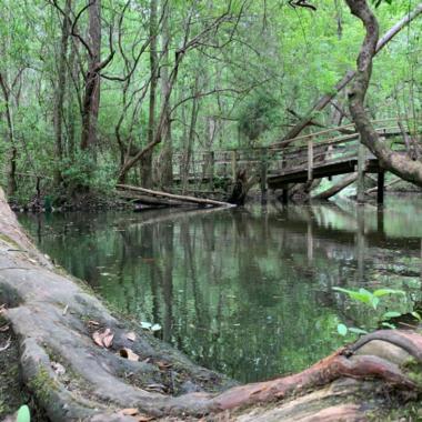 Edward Ball Nature Trail